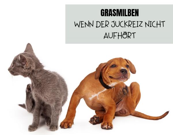 GRASMILBEN-WENN-DER-JUCKREIZ-NICHT-AUFHORT
