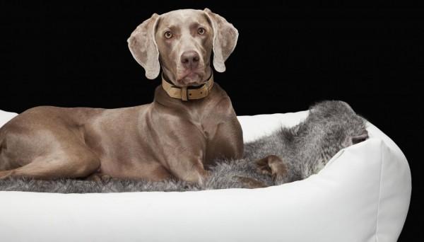 DOGIUS Hundebett weiß