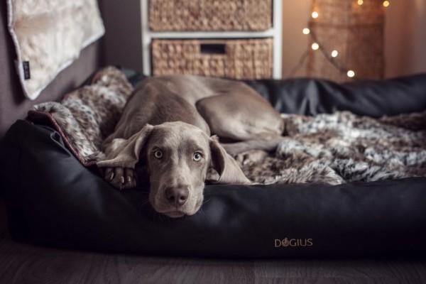 DOGIUS Hundebett schwarz