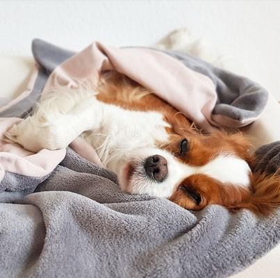 Goldhund Kuscheldecke